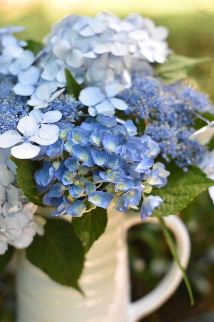 Image of freshly picked blue hydrangea