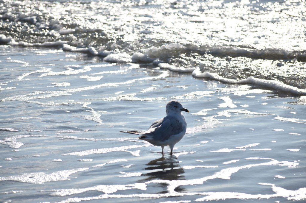 Image of sea gull and surf